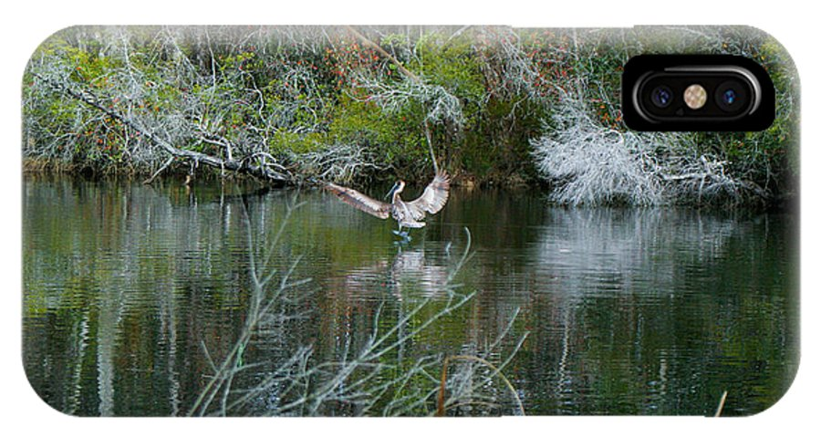 Pelican IPhone X Case featuring the photograph Playful Pelican by Mechala Matthews