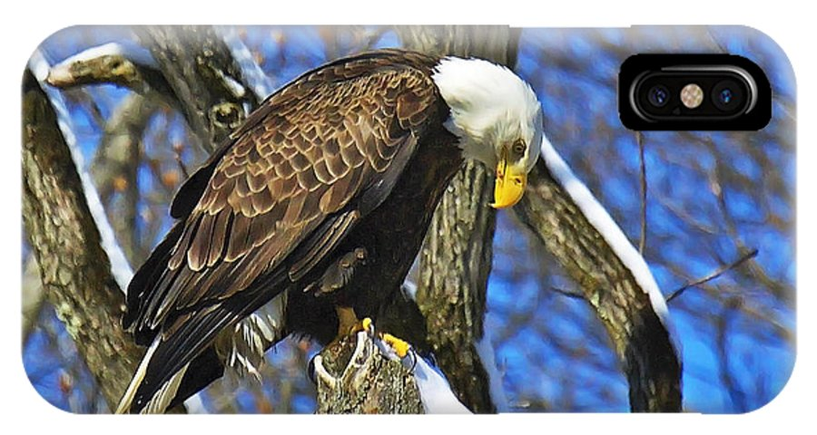 Bald Eagle Perched IPhone X Case featuring the photograph Please Bow by Rob Hawker
