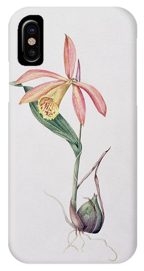 Orchid IPhone X Case featuring the painting Pleione Zeus Wildstein by Mary Kenyon-Slaney