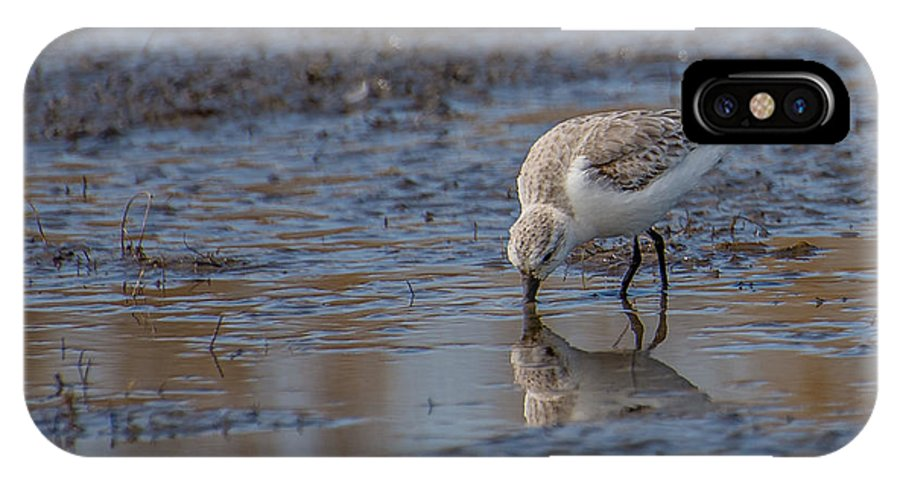 Plover IPhone X Case featuring the photograph Plover by Stacy Abbott