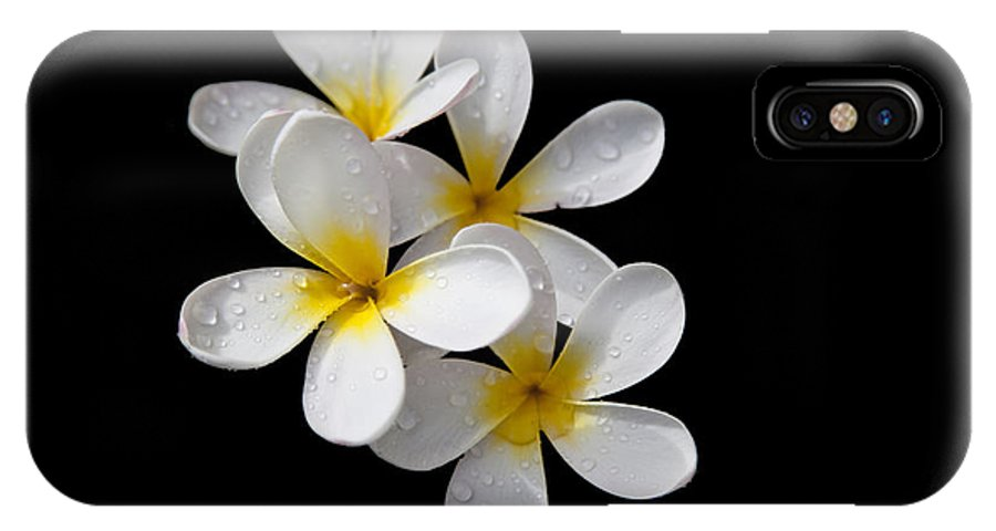 Plumeria IPhone X Case featuring the photograph Plumerias Isolated On Black Background by David Millenheft