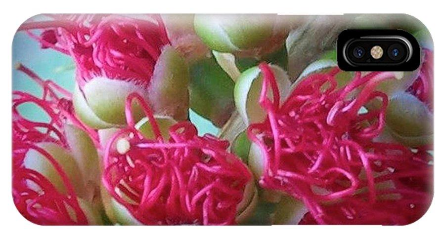 Pohutukawa IPhone X Case featuring the photograph Pohutukawa Tree Flowers by Wendy Yee