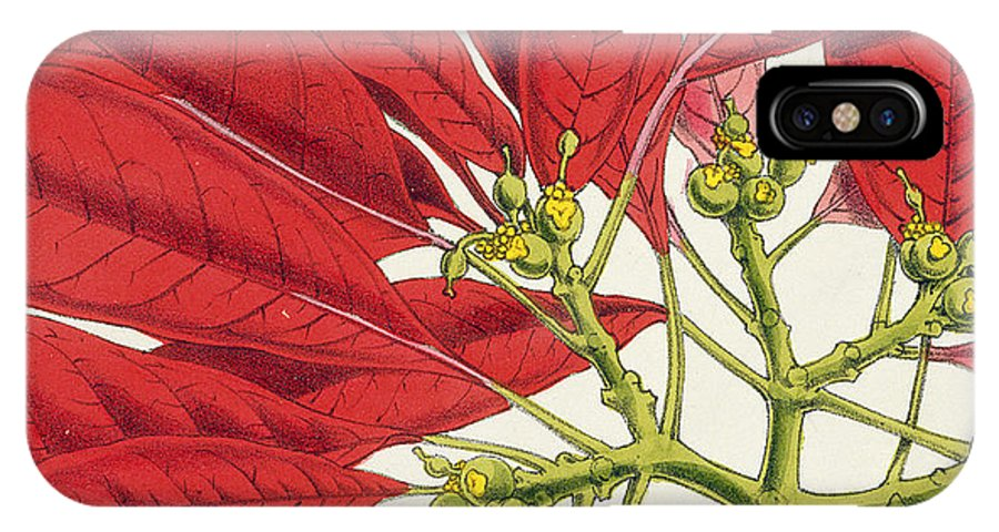 Rosea-carminata IPhone X Case featuring the painting Poinsettia Pulcherrima by WG Smith