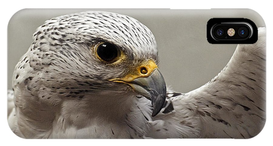 Point Defiance Gryfalcon IPhone X Case featuring the photograph Point Defiance Gryfalcon by Wes and Dotty Weber