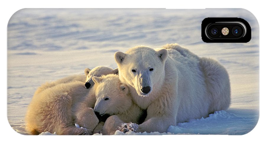 Arctic IPhone X / XS Case featuring the photograph Polar Bear Family Nap by Randy Green