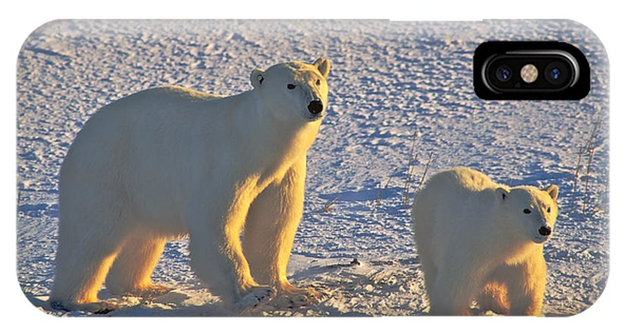 Arctic IPhone X / XS Case featuring the photograph Polar Bear Mother And Cub On Ice by Randy Green