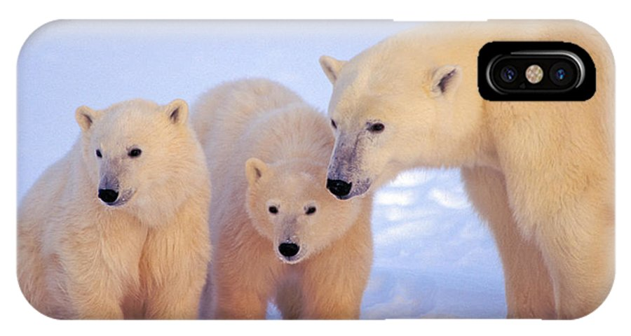 Arctic IPhone X / XS Case featuring the photograph Polar Bear Mother And Cubs by Randy Green