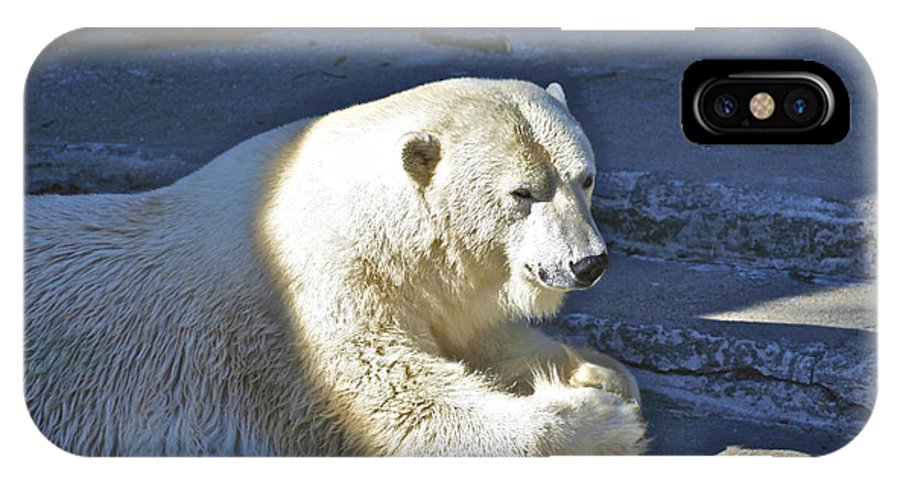 Animals IPhone X Case featuring the photograph Polar Bear by SC Heffner