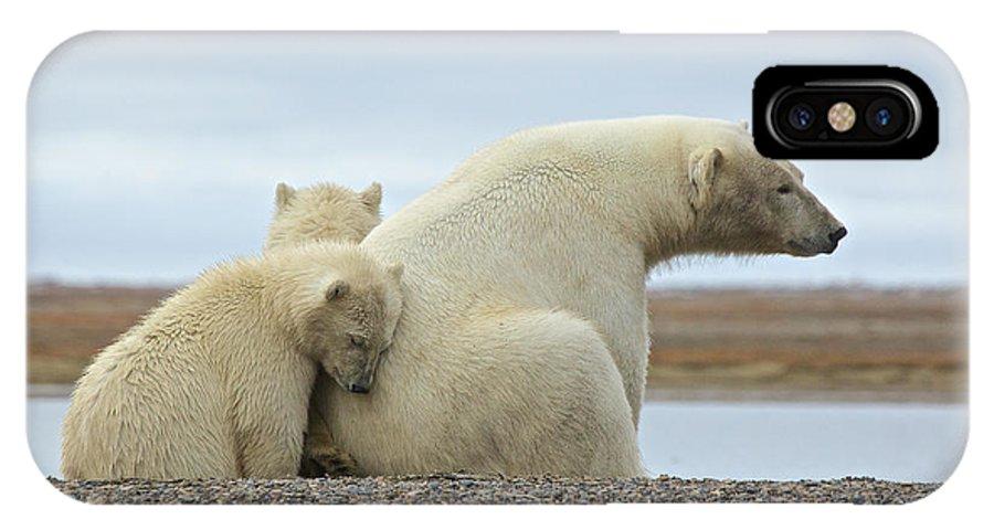 Polar Bear IPhone X Case featuring the photograph Polar Bear Snuggle by Charles MacPherson
