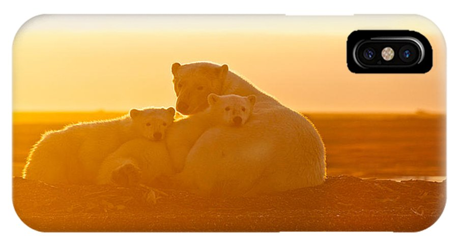 Polar Bear IPhone X Case featuring the photograph Polar Bears In The Setting Sun by Charles MacPherson