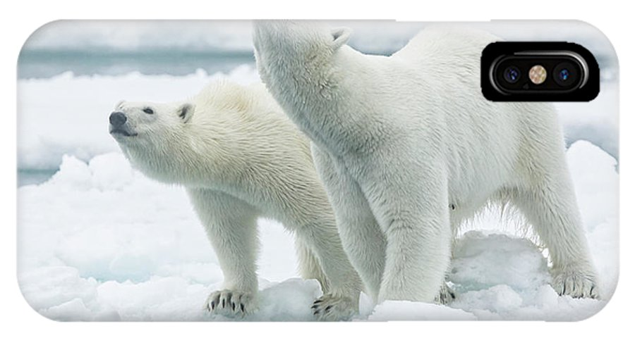 Mother IPhone X Case featuring the photograph Polar Bears, Mother And Son by Joan Gil Raga