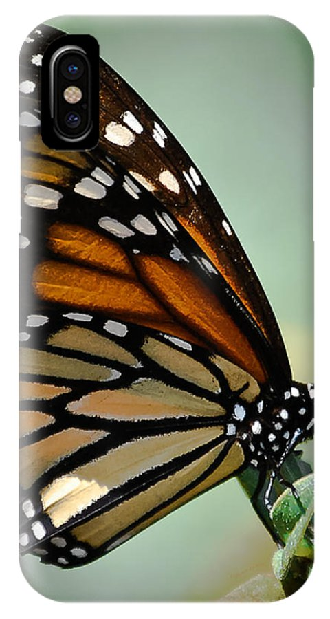 Butterfly IPhone X Case featuring the photograph Polka Dots And Wings by DigiArt Diaries by Vicky B Fuller