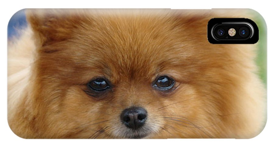 Dog IPhone X Case featuring the photograph Pomeranian by Diane Grindol