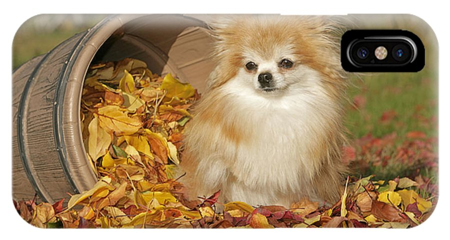 Pomeranian IPhone X / XS Case featuring the photograph Pomeranian Dog by Rolf Kopfle