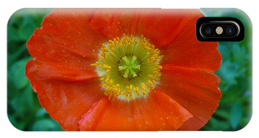 Floral IPhone X Case featuring the photograph Poppy by Nicki Bennett