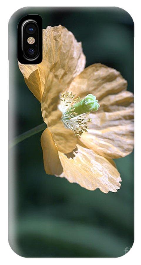 Poppy Orange IPhone X Case featuring the photograph Poppy by Tony Cordoza
