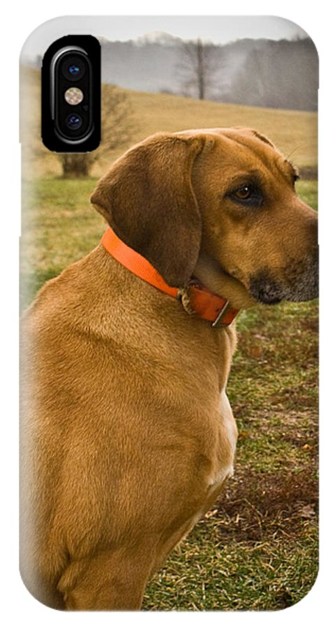 Dog IPhone X Case featuring the photograph Portrait Of A Dog by Douglas Barnett