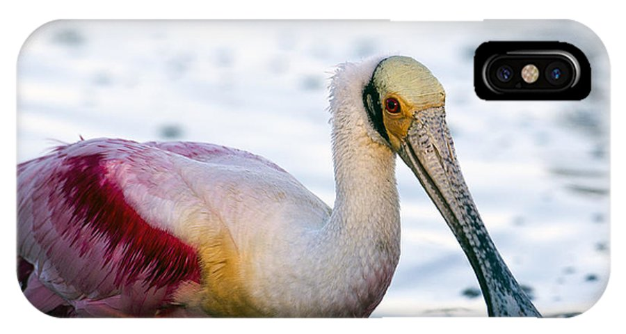 Everglades National Park IPhone X Case featuring the photograph Portrait Of A Roseate Spoonbill by Rodney Cammauf