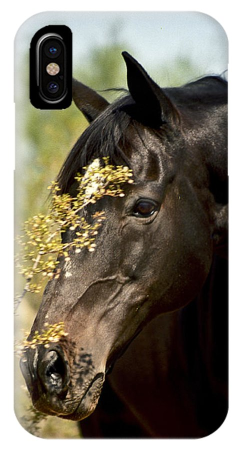Horse IPhone X Case featuring the photograph Portrait Of A Thoroughbred by Kathy McClure