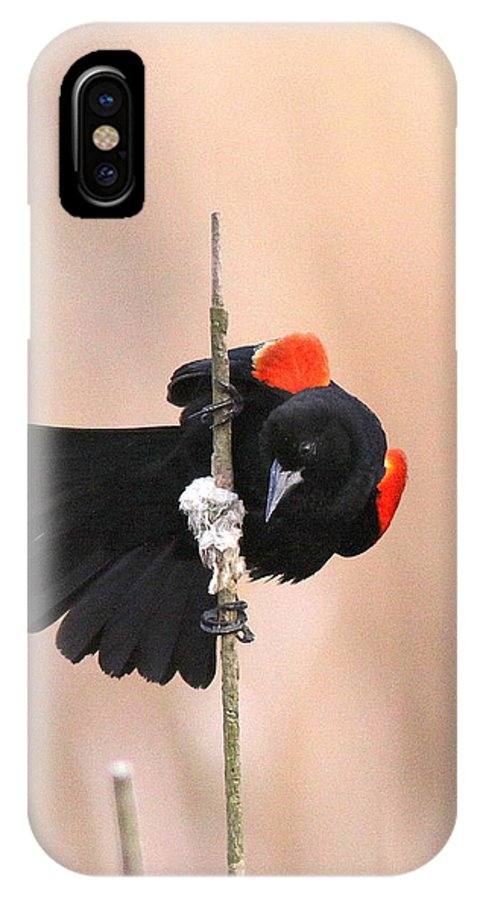 Red-winged Blackbird IPhone X Case featuring the photograph Posing For The Lady - Red-winged Blackbird by Travis Truelove