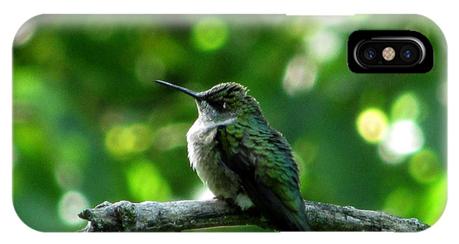 Hummingbird IPhone X Case featuring the photograph Posing Ruby Throat by Kimberly Mackowski