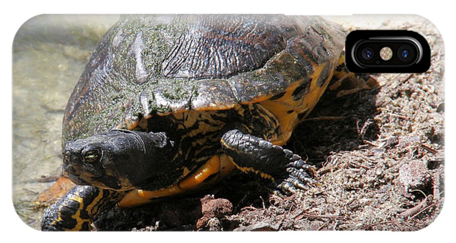 Turtle IPhone X Case featuring the photograph Possible Cooter Turtle by Doris Potter