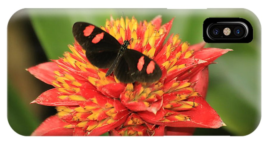 Framed Butterfly Print IPhone X Case featuring the photograph Postman Butterfly by Melvin Busch