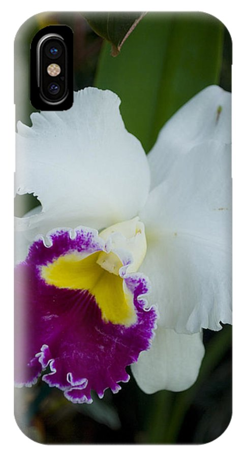 Orchid IPhone X Case featuring the photograph Potted Orchid by Breanna Calkins