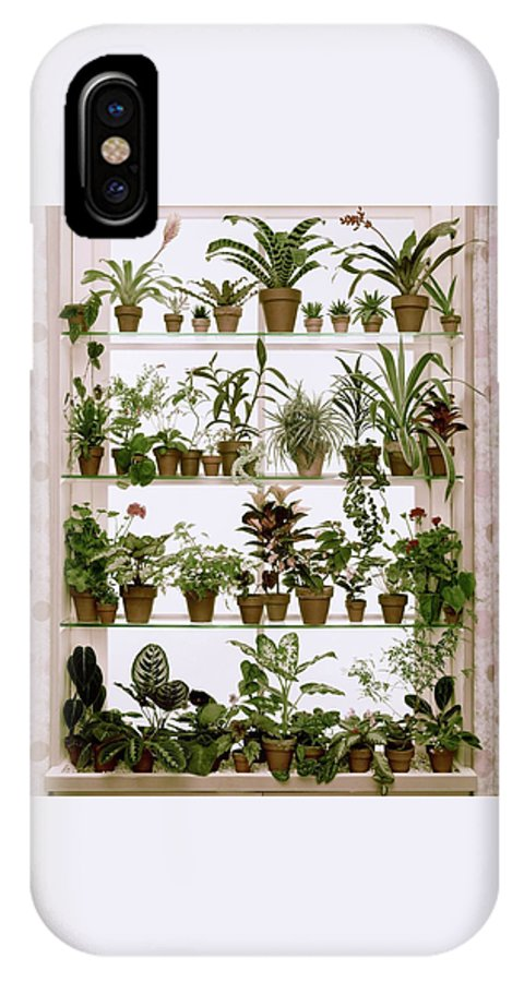 Plants IPhone X Case featuring the photograph Potted Plants On Shelves by Wiliam Grigsby