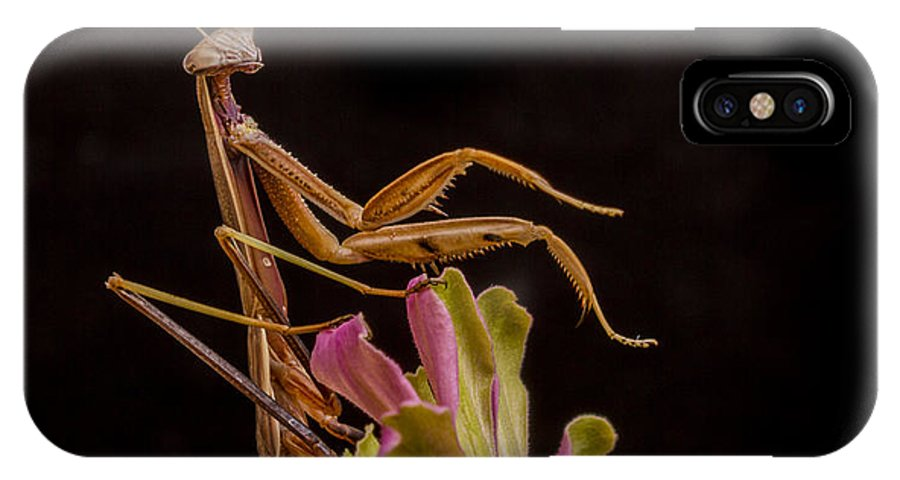 Mantis IPhone X Case featuring the photograph Praying Mantis Atop Zinnia by Jean Noren