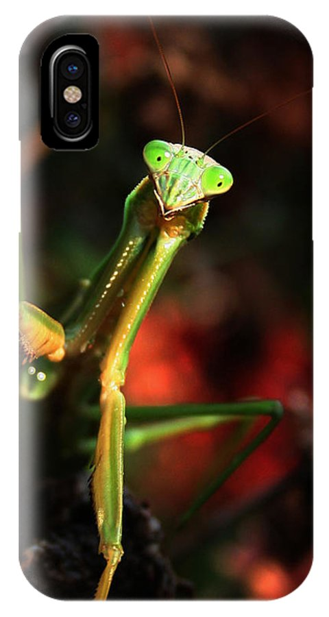 Praying Mantis IPhone X Case featuring the photograph Praying Mantis Portrait by Linda Sannuti