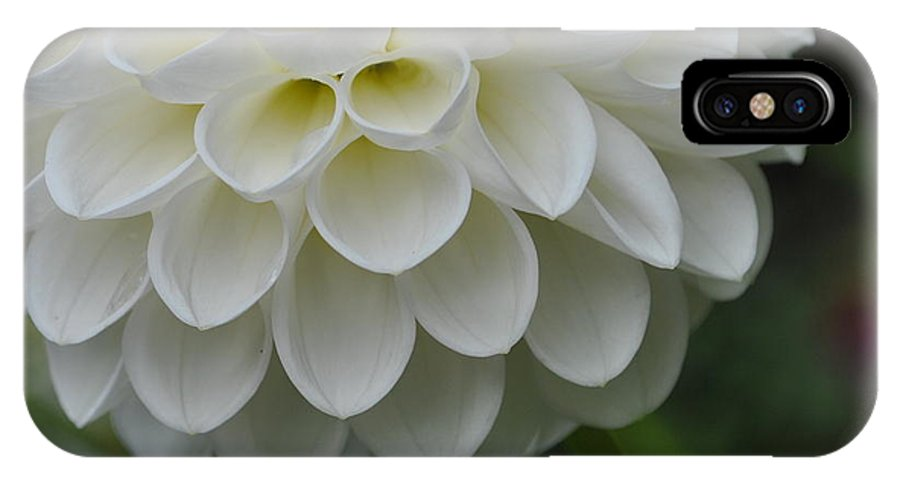 Wedding IPhone X Case featuring the photograph Precious Petals by Charlotte Stevenson