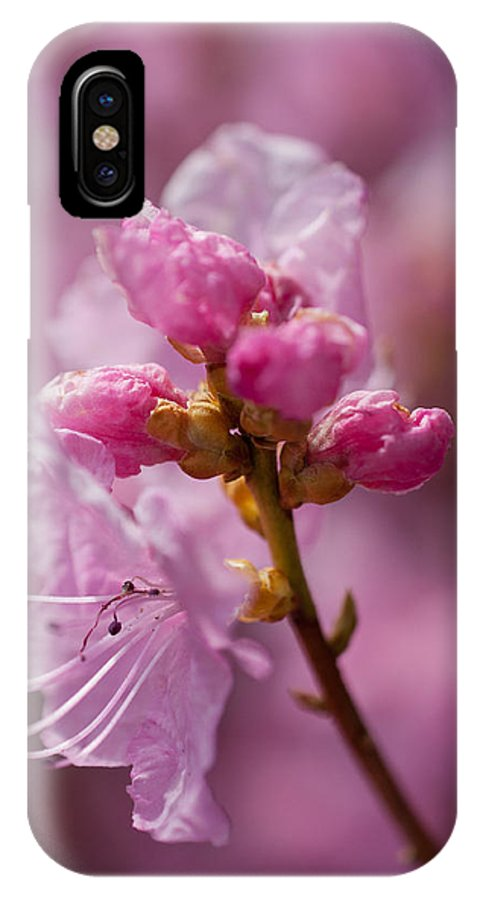Pink Flowers IPhone X Case featuring the photograph Pretty In Pink by Eryn Carter