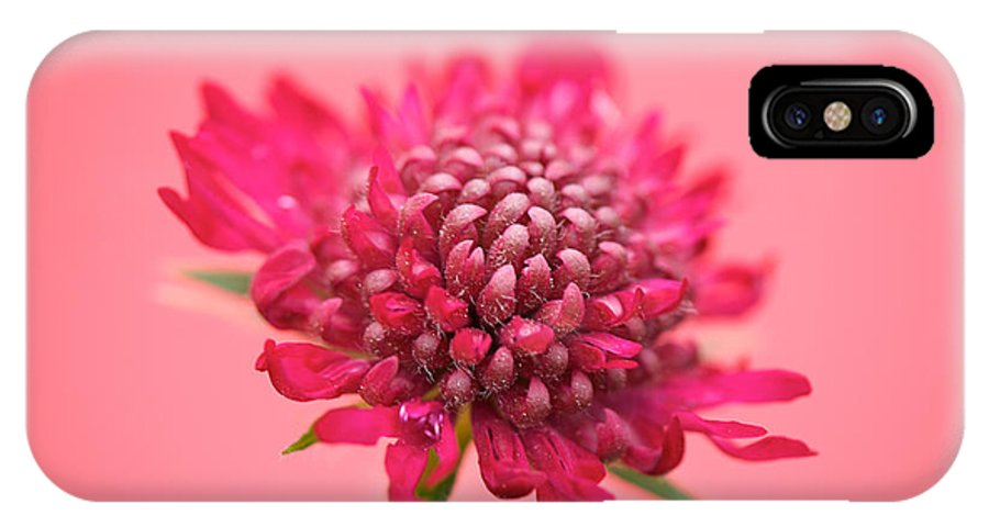 Lisa Knechtel IPhone X Case featuring the photograph Pretty In Pink by Lisa Knechtel