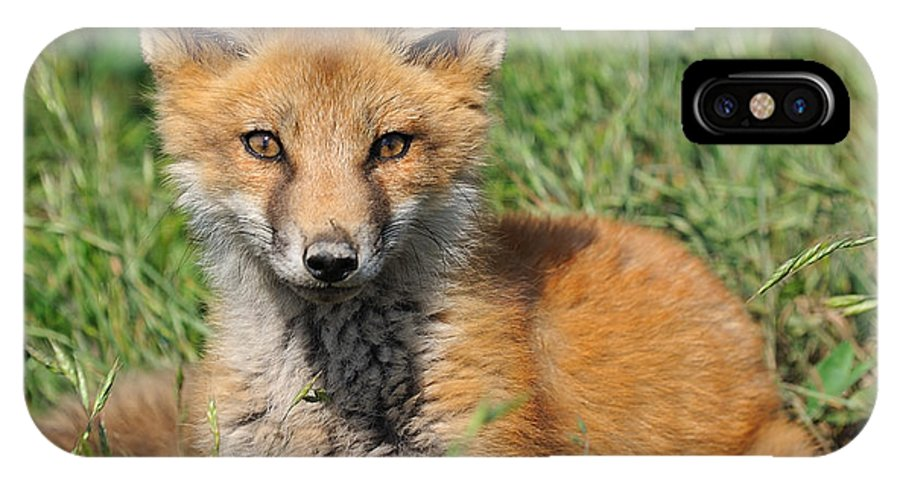Angelcher Iphone X Case Featuring The Digital Art Pretty Red Fox Kit By Angel Cher