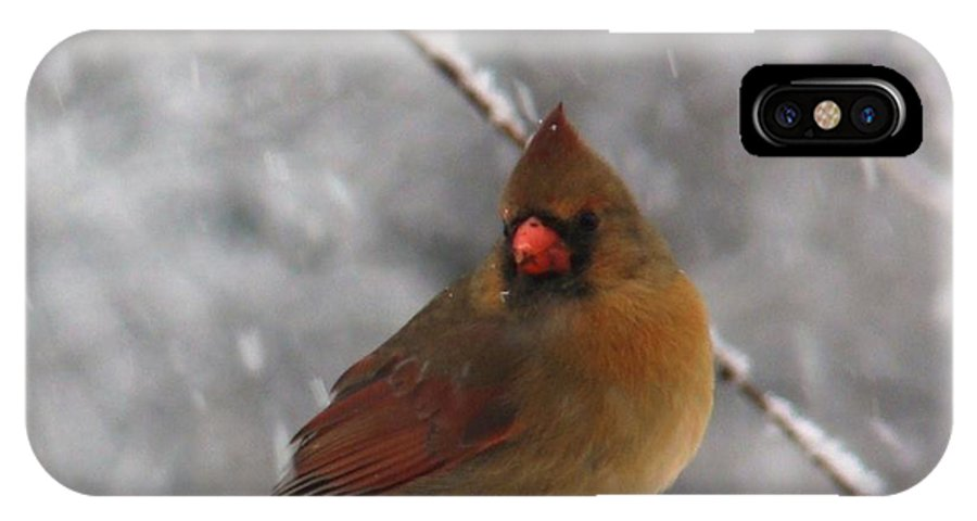 Cardinal IPhone X Case featuring the photograph Princess In The Snow by Leea Baltes