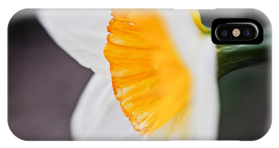 Daffodil IPhone X Case featuring the photograph Profile Of A Daffodil by Jeff Picoult