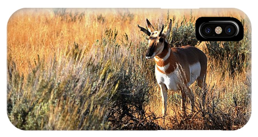 Wildlife IPhone X / XS Case featuring the photograph Pronghorn Buck by Deanna Cagle