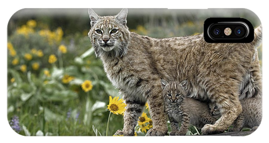 Bobcat And Kittens IPhone X Case featuring the photograph Protection by Wildlife Fine Art