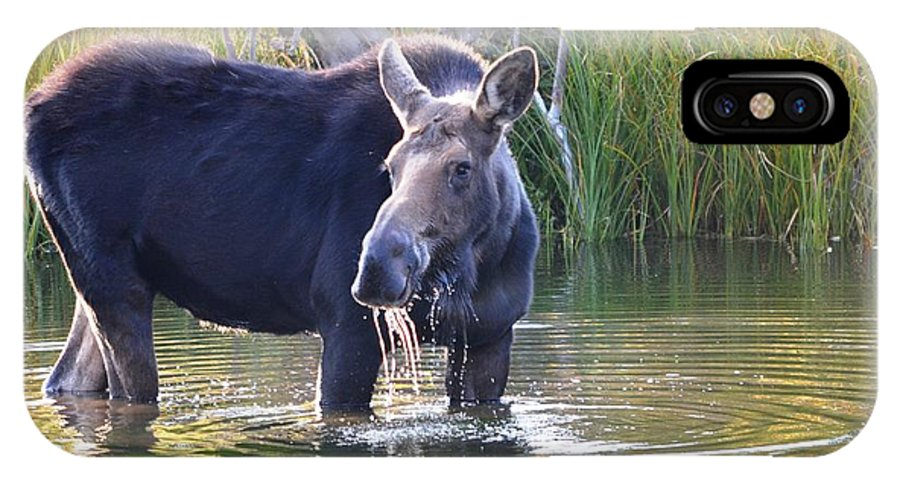 Moose IPhone X / XS Case featuring the photograph Protective Mother by Deanna Cagle