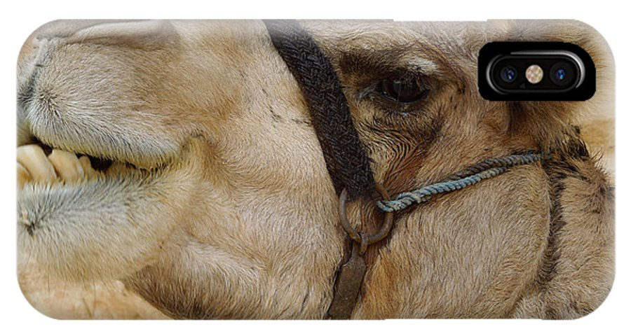Colette IPhone X Case featuring the photograph Proud Bou Bou Camel Sinai Egypt by Colette V Hera Guggenheim