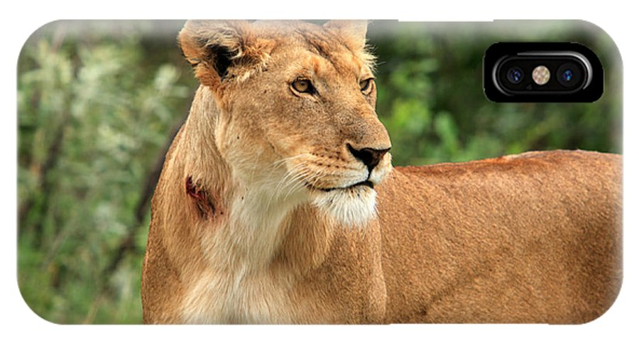 Africa IPhone X Case featuring the photograph Proud Lioness by Aidan Moran