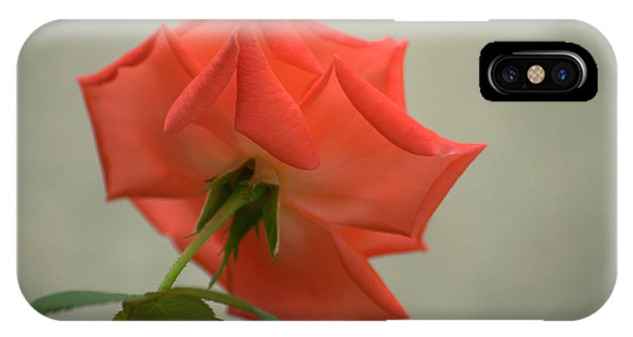 Rose IPhone X Case featuring the photograph Pure Sweetness by Jen T