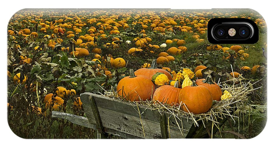 Pumpkins IPhone X Case featuring the photograph Pumpkin Field by Rob Mclean