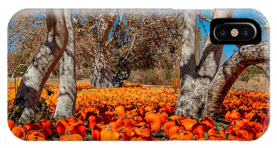 Pumpkin Patch IPhone X Case featuring the photograph Pumpkin Patch by DJ Laughlin