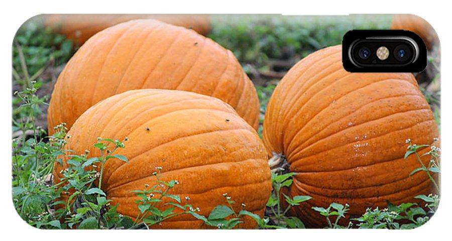 Pumpkin IPhone X Case featuring the photograph Pumpkin Pie by Tiffany Erdman