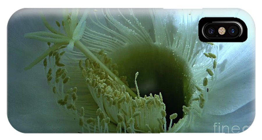 Cactus Flower IPhone X Case featuring the photograph Purity by Leanne Seymour
