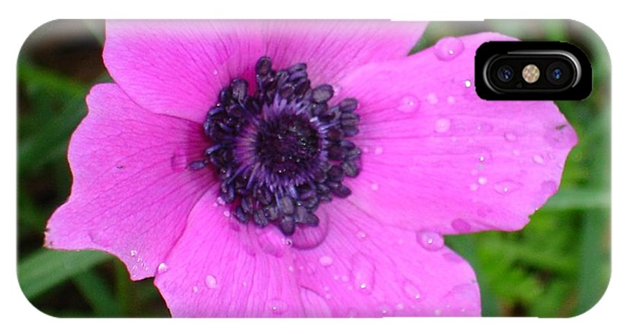 Anemone Coronaria IPhone X Case featuring the photograph Purple Anemone - Anemone Coronaria Flower by Taiche Acrylic Art