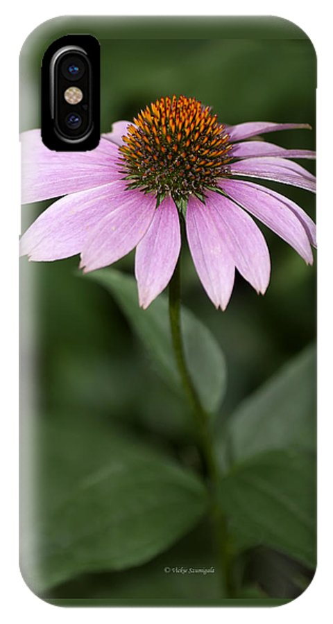 Purple Coneflower IPhone X Case featuring the photograph Purple Cone Flower by Vickie Szumigala