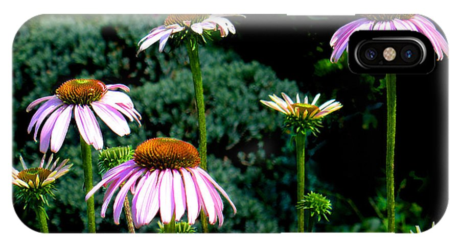 Cone Flowers IPhone X Case featuring the photograph Purple Cone Flowers by Steve Karol